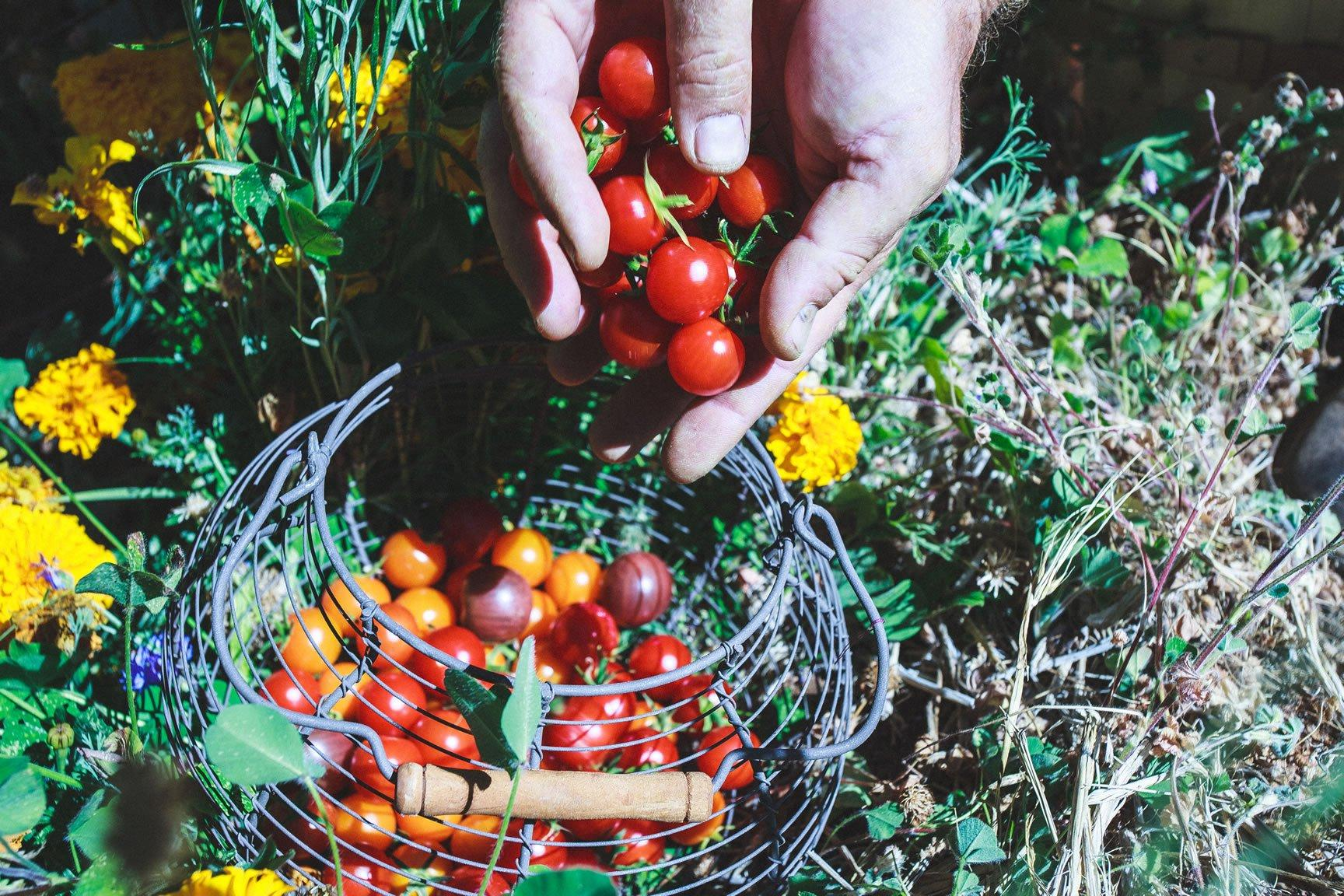 freeOrganic_Gardeningwallpaper_13