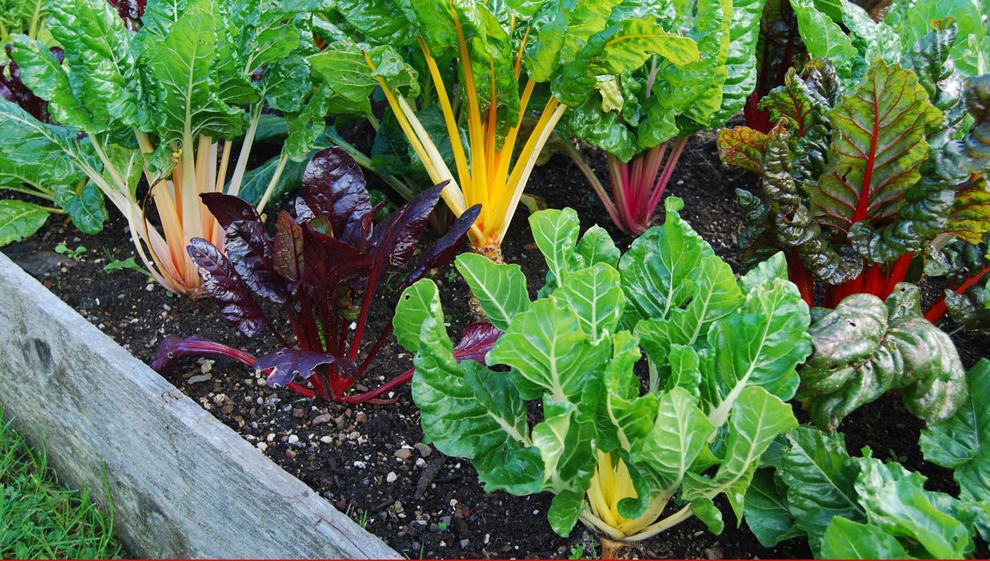 freeOrganic_Gardeningwallpaper_14
