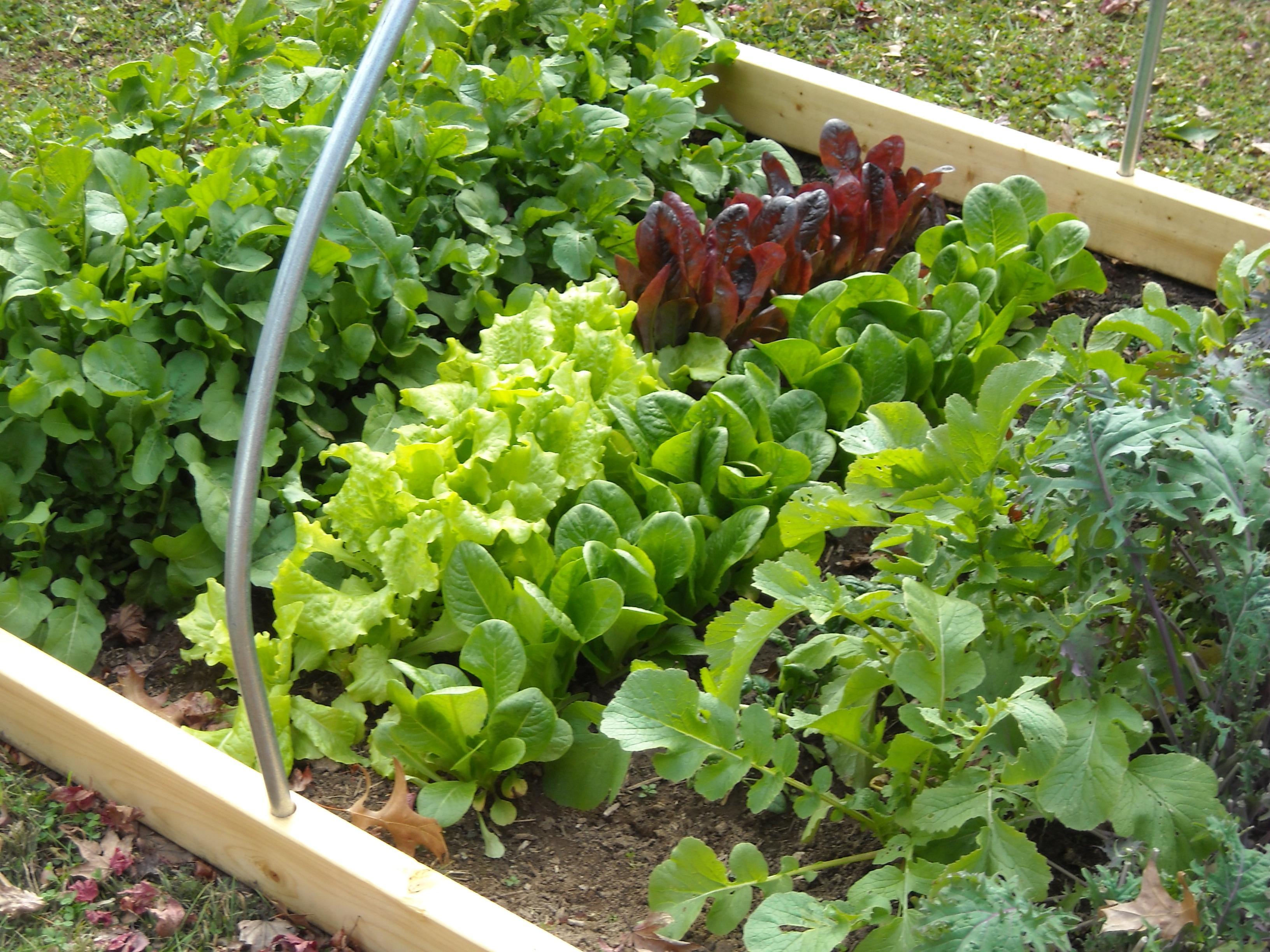 freeOrganic_Gardeningwallpaper_18