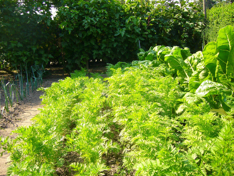 freeOrganic_Gardeningwallpaper_25