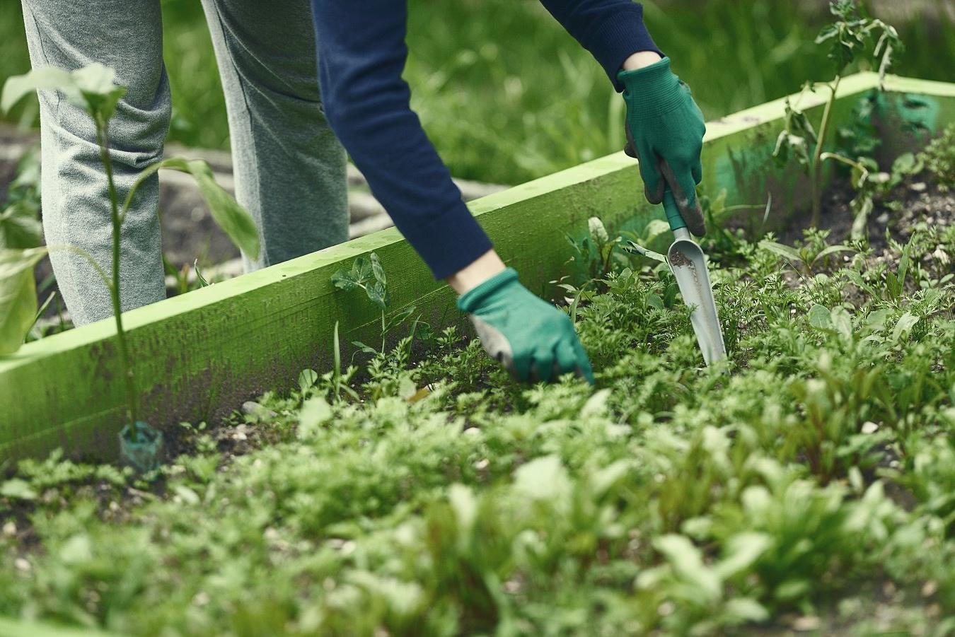freeOrganic_Gardeningwallpaper_28