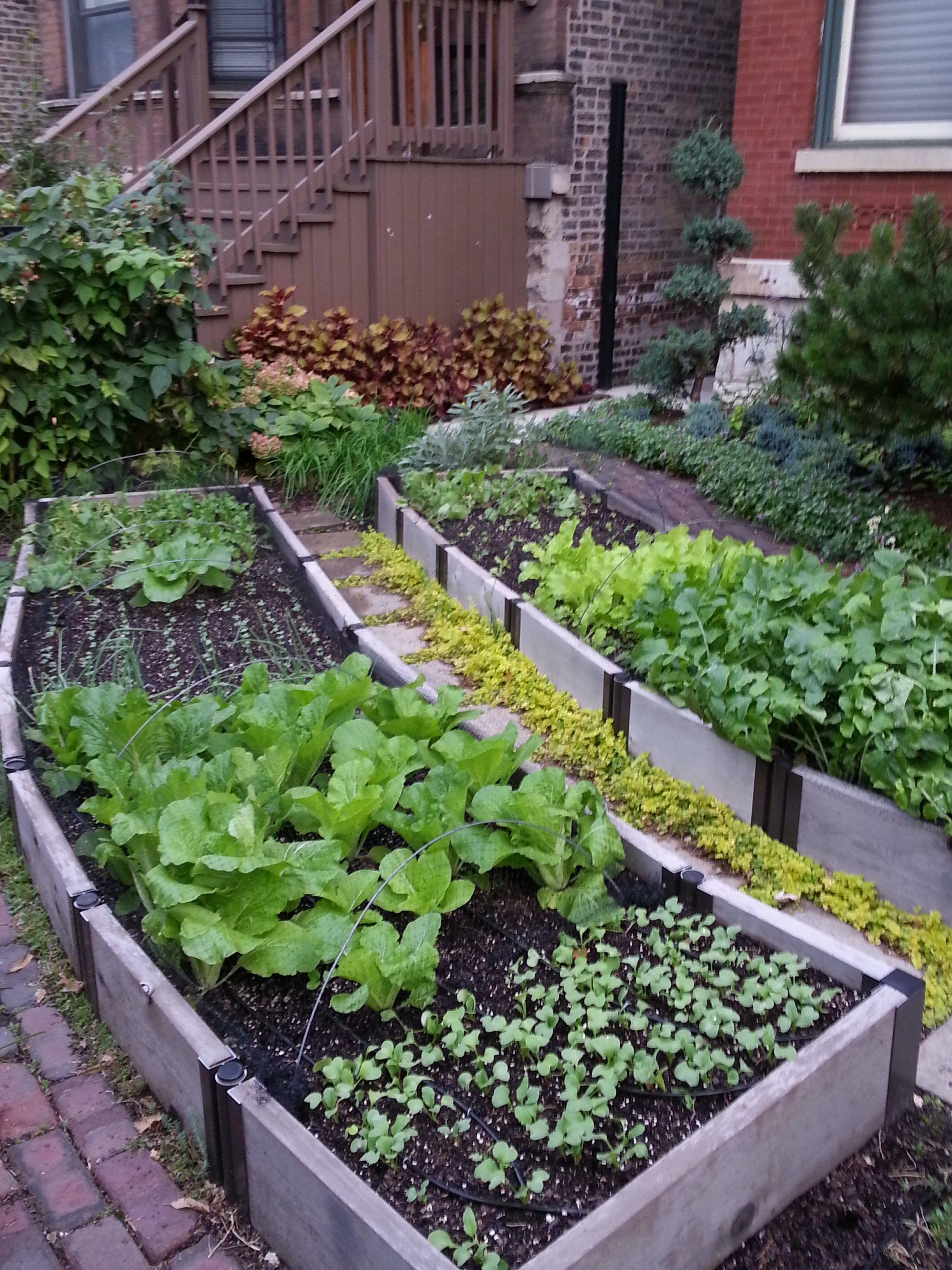 freeOrganic_Gardeningwallpaper_42