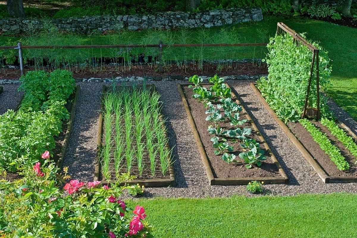 freeOrganic_Gardeningwallpaper_9